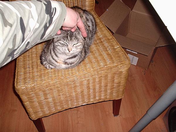 kitty-goes-lol.jpg